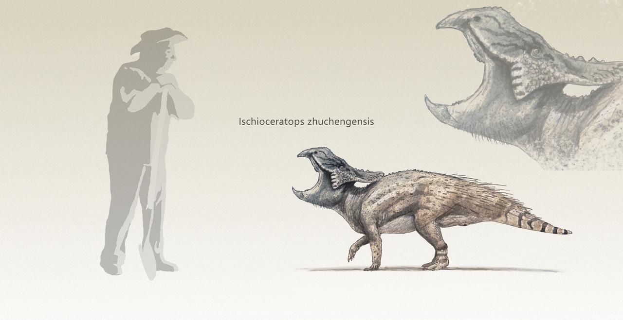 Ischioceratops