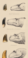 The theropods of northern Germany