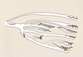 Basic phylogeny of dragons