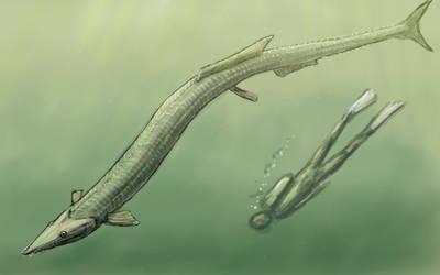 Stratodus sketch