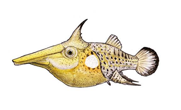 Rostropycnodus