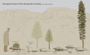 Bromacker fauna