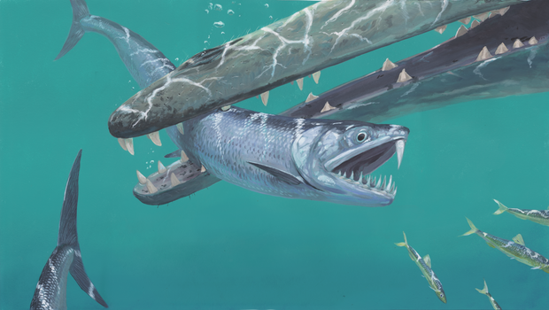 Large-bodied sabre-toothed anchovies