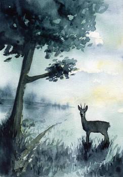 Early hours - Roe deer