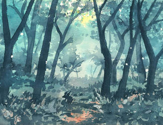 Evening in the woods