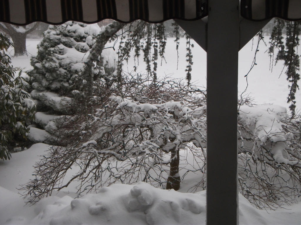 Blizzard Of January 2016 Photos 4 by Supermutant2099