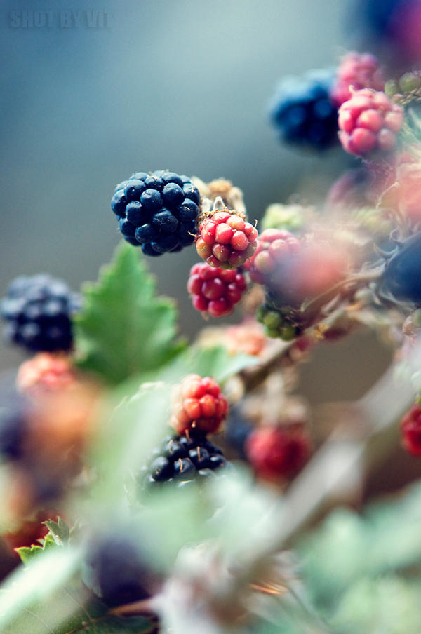 Berries by Piddling