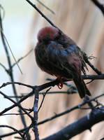 Ptak by k-b-n