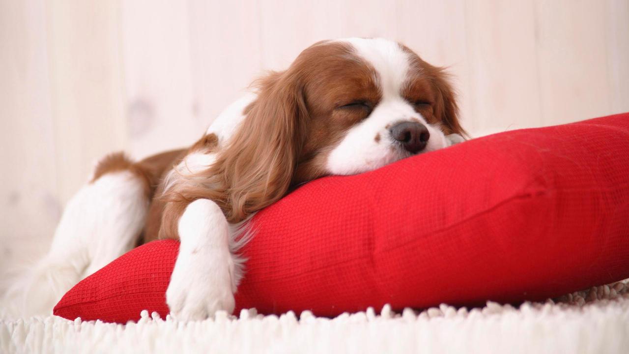 Slumbering Puppy by OguriAiri on DeviantArt