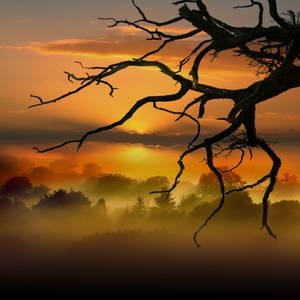 DEAD TREE by TADBEER