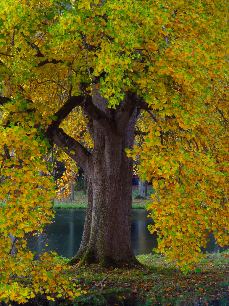 YELLOW TREE by TADBEER