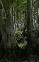 TREE BOUNDARY by TADBEER
