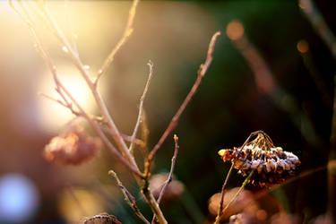 Wakey, Wakey it's Day breaky! by pinotbutter