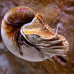 Nautilus 03