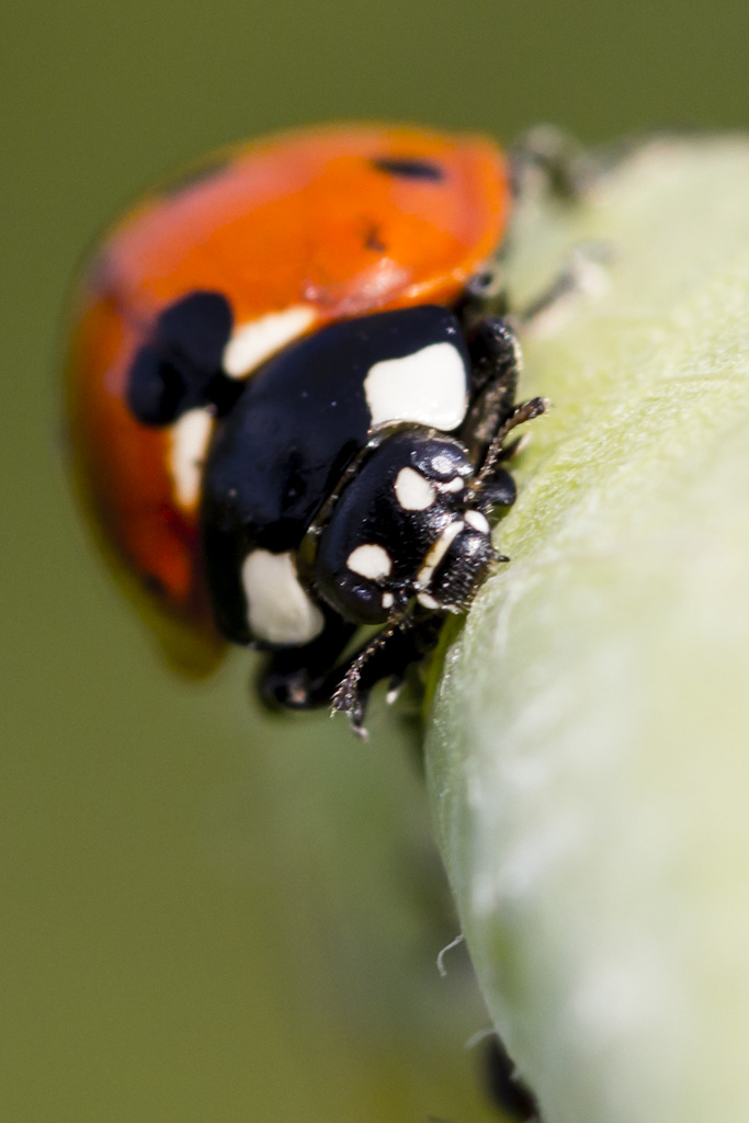 Ladybirds Invade Limpsfield: Ladybug Invasion 4 By Helldrad On DeviantArt
