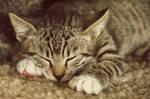 The village kitty IV