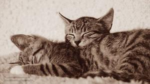 The village kitties