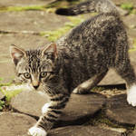 The village kitty VI