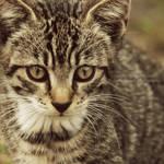 The village kitty VII