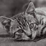 The village kitty XI
