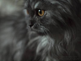 The persian kitty VIII by tipoe