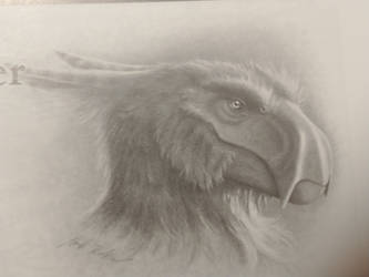 Pteroraptor, Prehistoric Times.
