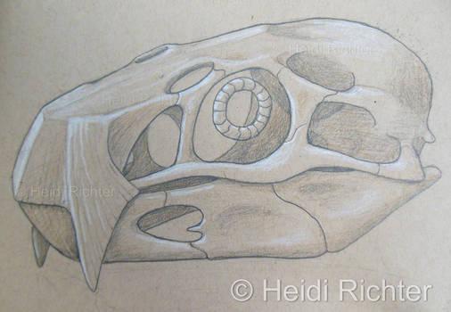 Pteroraptor Skull 2 by Heidi Richter
