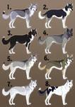 Point Auction- Siberian Huskies CLOSED