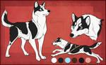 STS Dog - Cooper