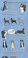 Tutorial - Dilutes in Dogs