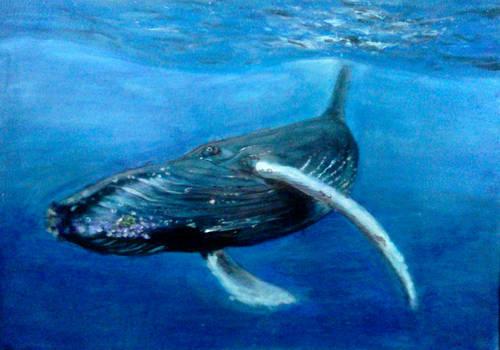 The Big Humpback Whale