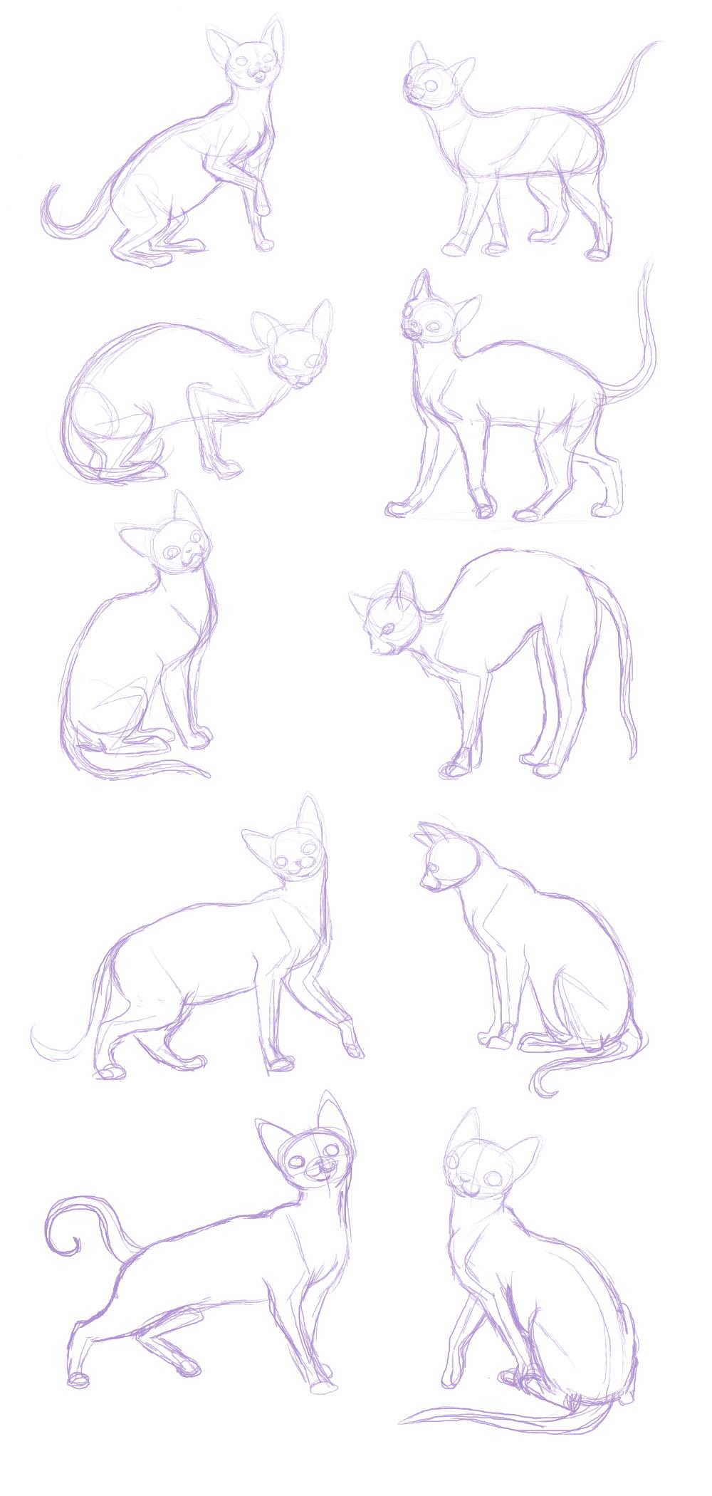 cat sketches-anatomy practice by BakaMichi on DeviantArt