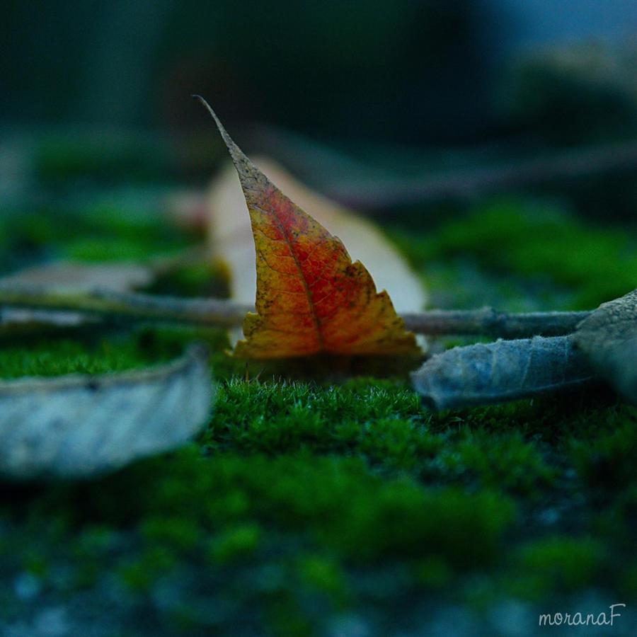 Leaf no.1 by moranaF