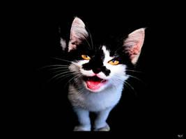 Cat by moranaF
