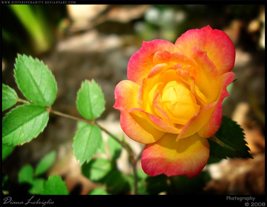 Natural Rose Colors