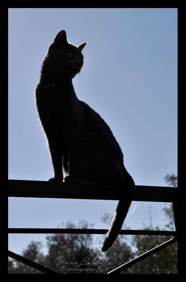 Cat silhouette by DianaLobriglio