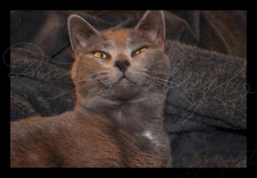 Mafia_CAT by DianaLobriglio