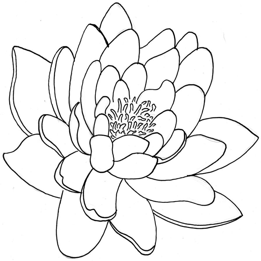 Line Drawing Of Lotus Flower : Lotus flower by juddess on deviantart