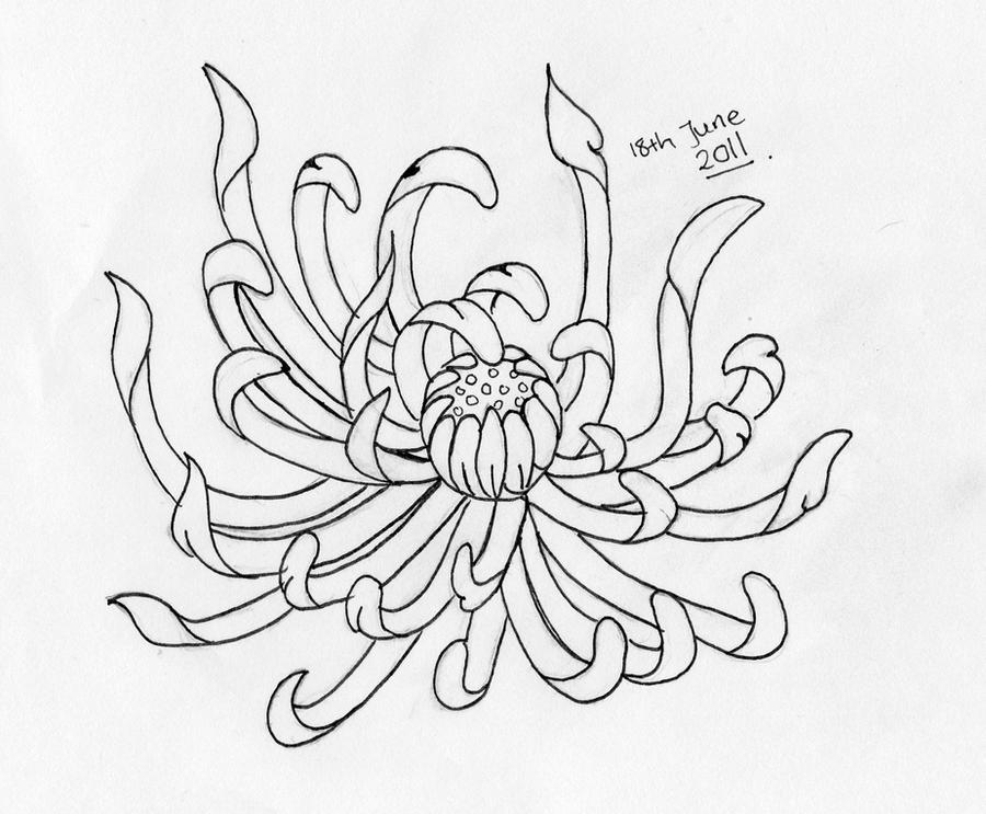 Chrysanthemum Flower Line Drawing : Chrysanthemum by juddess on deviantart