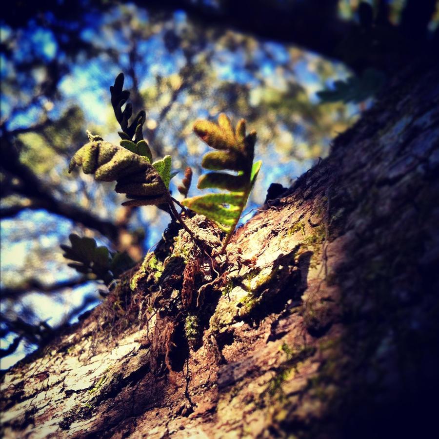 Little Leaf by Horsegirl558