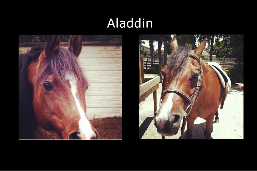 Aladdin by Horsegirl558