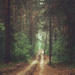 Road through foggy pine forest by gmarv1n