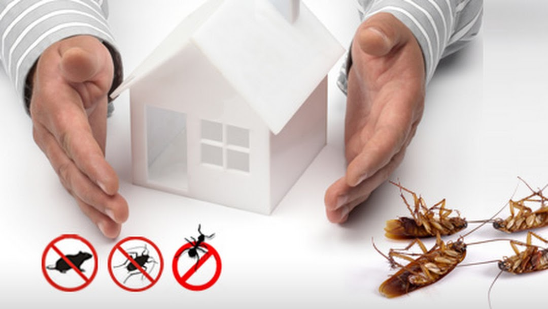 Rodent Control Services in Melbourne