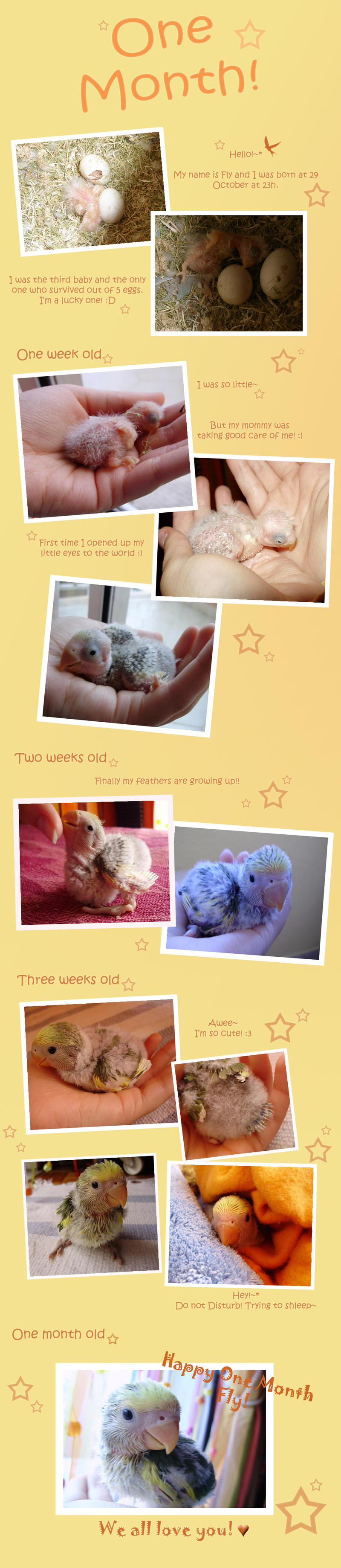 Lovebird One month old by Sara-Araujo