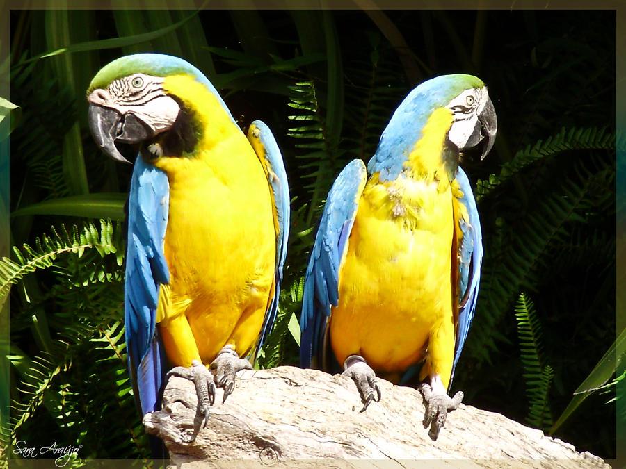 BY Macaw by Sara-Araujo