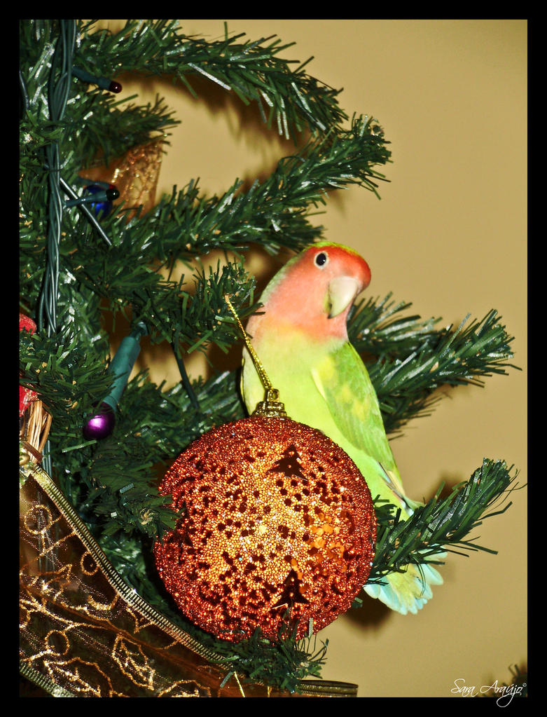 Merry Christmas Moxy by Sara-Araujo