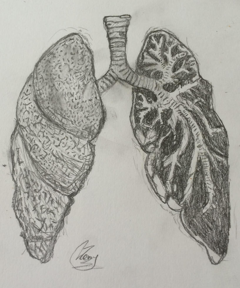 Lung Diagram by MrPokemonBlack123