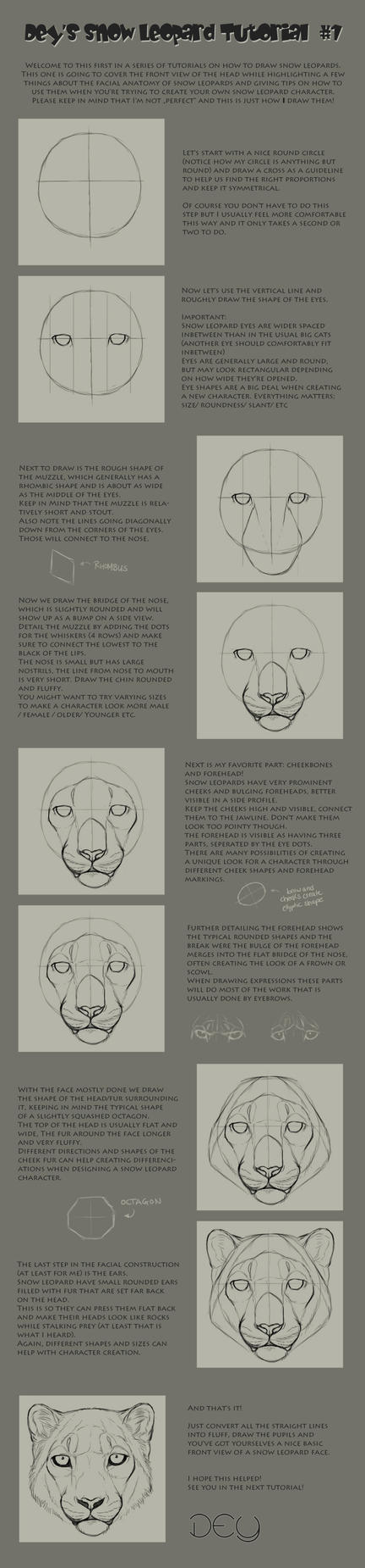 Tutorial: Snow Leopard Head #1 by DeyVarah