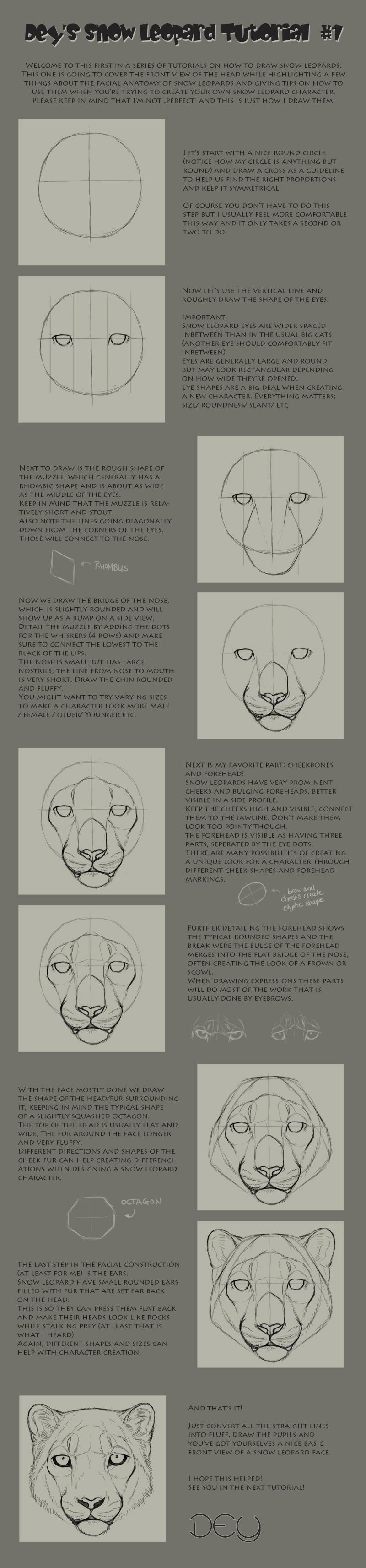 Tutorial: Snow Leopard Head #1 by DeyVarah