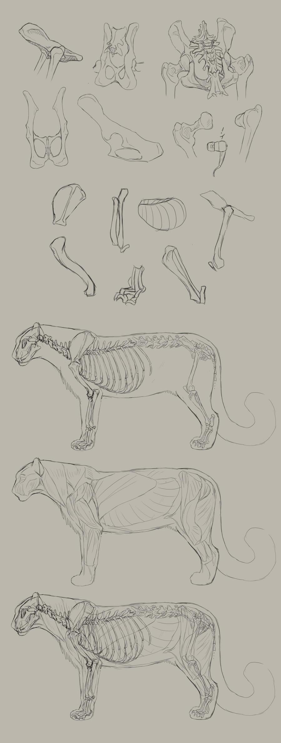 Anatomy Practice Dump #1 by DeyVarah